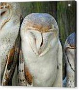 Homosassa Springs Snowy Owls 1 Acrylic Print
