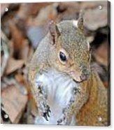 Homosassa Springs Squirrel 2 Acrylic Print
