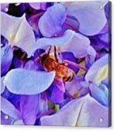 Honey Bee Cling Acrylic Print