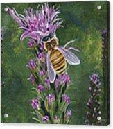 Honeybee On Liatis Acrylic Print