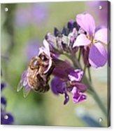 Honeybee On Purple Wall Flower Acrylic Print
