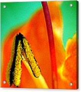 Honeysuckle Spectacular Acrylic Print