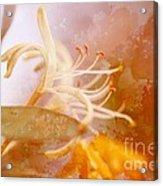 Honeysuckle With Texture Acrylic Print
