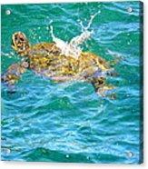 Honu Hawaiian Green Sea Turtle Acrylic Print