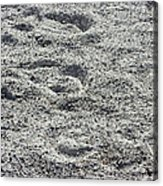 Hoof Prints In Sand Acrylic Print
