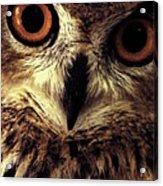 Hoot Owl Acrylic Print