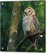 Hootie Barred Owl Acrylic Print