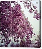 Hopeful Spring Acrylic Print