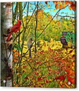 Hoping For Leftovers Acrylic Print