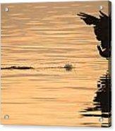 Hopping On Water Acrylic Print