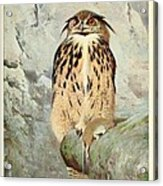 Horned Owl Acrylic Print