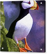 Horned Puffin Acrylic Print