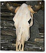 Horned Skull Acrylic Print