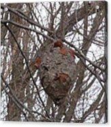 Hornets Nest East Acrylic Print