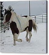 Horse 03 Acrylic Print