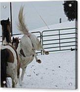 Horse 13 Acrylic Print