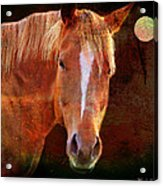 Horse 7 Acrylic Print