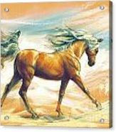 Horse Akalteke Acrylic Print