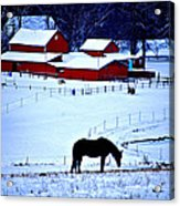 Horse Alone Acrylic Print