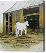 Horse And Barn Acrylic Print by Bertie Edwards