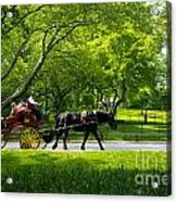 Horse And Carriage Central Park Acrylic Print
