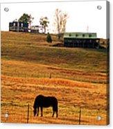 Horse And Farm By Jan Marvin Acrylic Print