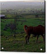 Horse And Farmhouse Acrylic Print