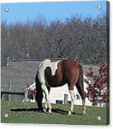 Horse And Shadow Acrylic Print