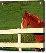 Horse And White Fence Acrylic Print