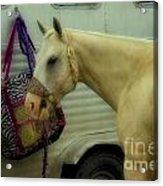 Horse Art 2 Acrylic Print