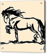 Horse - Blacky Acrylic Print