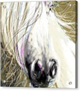 Horse Blowing In The Wind Acrylic Print