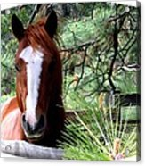 Horse Country Acrylic Print