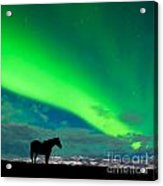 Horse Distant Snowy Peaks With Northern Lights Sky Acrylic Print