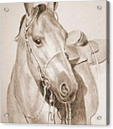 Horse Drawing Acrylic Print