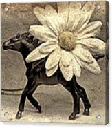 Horse Dream Acrylic Print