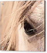 Horses Soul Acrylic Print