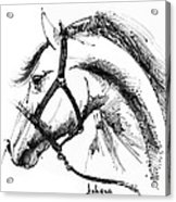 Horse Face Ink Sketch Drawing Acrylic Print