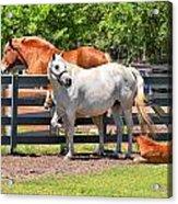 Horse Family Acrylic Print
