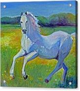 Horse Fancy Acrylic Print by Gwen Carroll