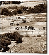 Horse Farm At Kourion Acrylic Print