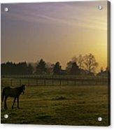 Horse Farm Sunrise Acrylic Print