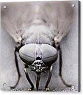 Horse Fly Acrylic Print
