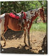 Horse For Rent South Lake Tahoe Acrylic Print
