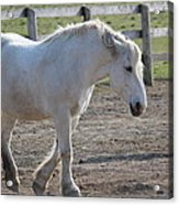 Horse Friends Acrylic Print