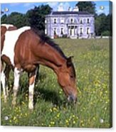 Horse Grazes Near St. Clarens Acrylic Print