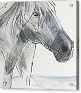 Horse Head Drawing Acrylic Print