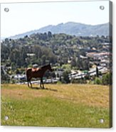 Horse Hill Mill Valley California 5d22662 Acrylic Print