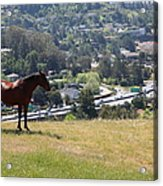Horse Hill Mill Valley California 5d22663 Acrylic Print