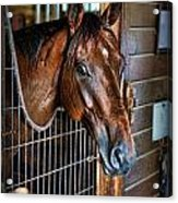 Horse In A Box Stall II - Horse Stable Acrylic Print by Lee Dos Santos
